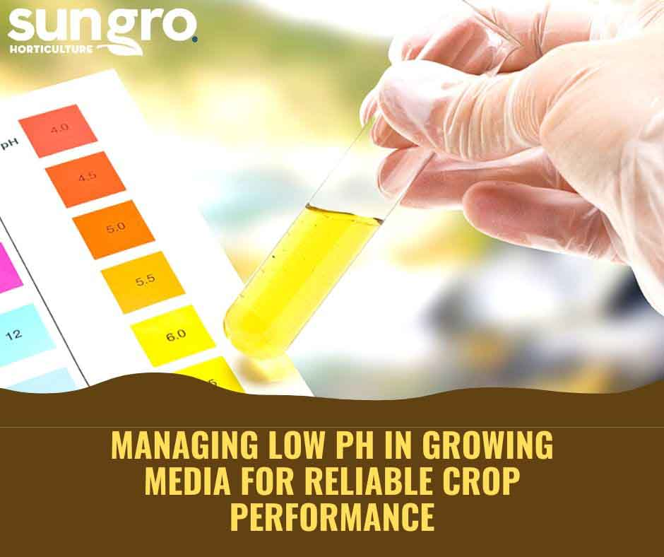 Managing Low pH in Growing Media for Reliable Crop Performance Featured Image